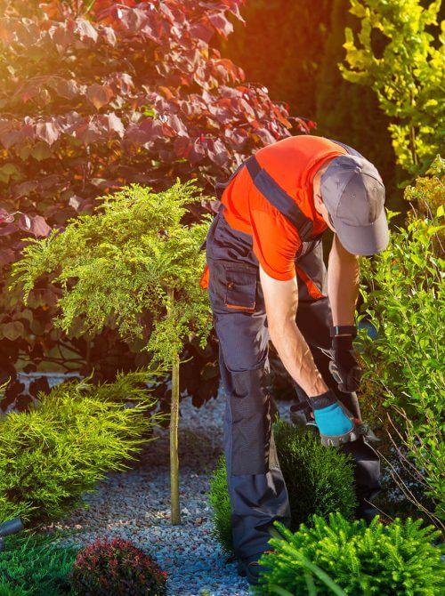 landscaping design Calgary - gardening