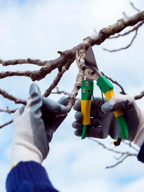 landscaping design Calgary - tree pruning
