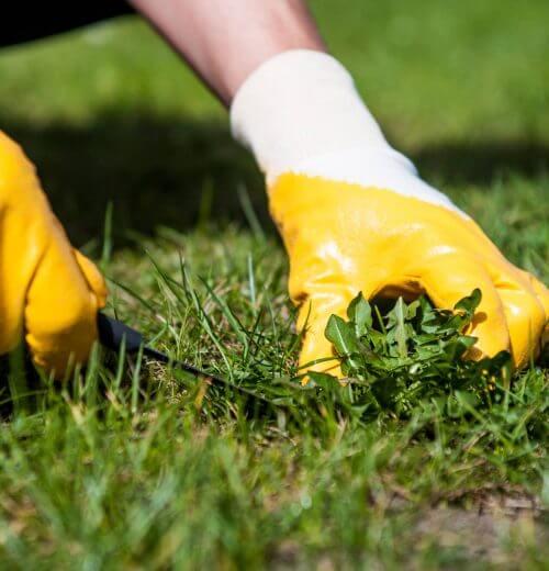 Property Maintenance Calgary - weed-trimming